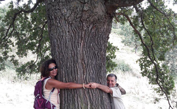 embrasser-un-arbre