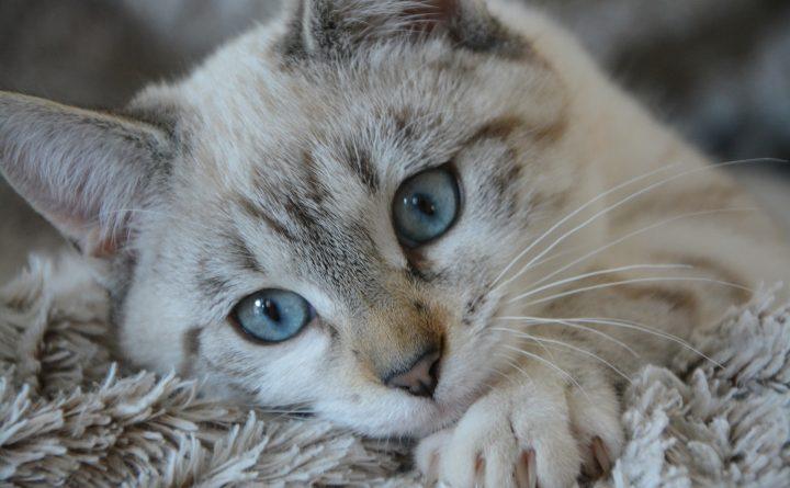 cat-2783601_1920