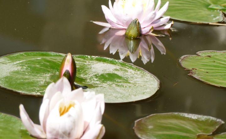 fleurs12-2