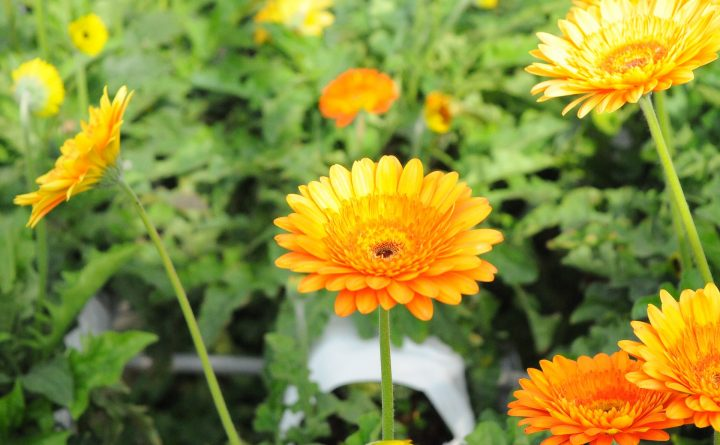 flower-2110696_1920
