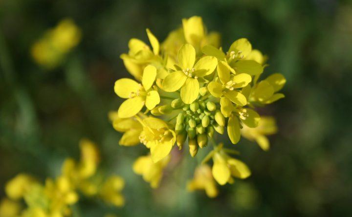 flower-783946_1920