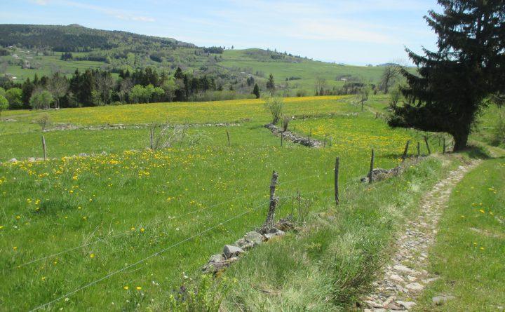 marche-nature-chemin-campagne