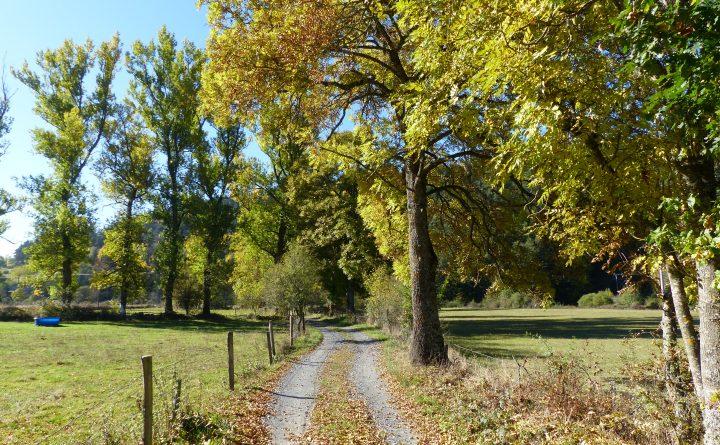 marcher-champs-arbre-2