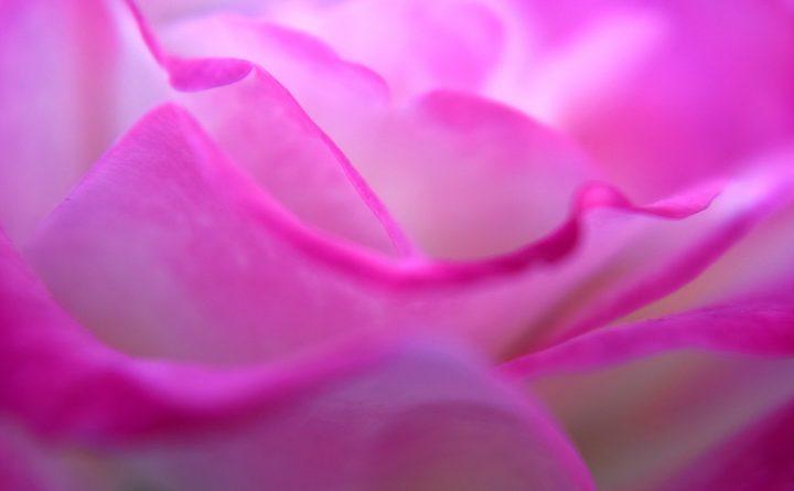 pink-3224486_1920