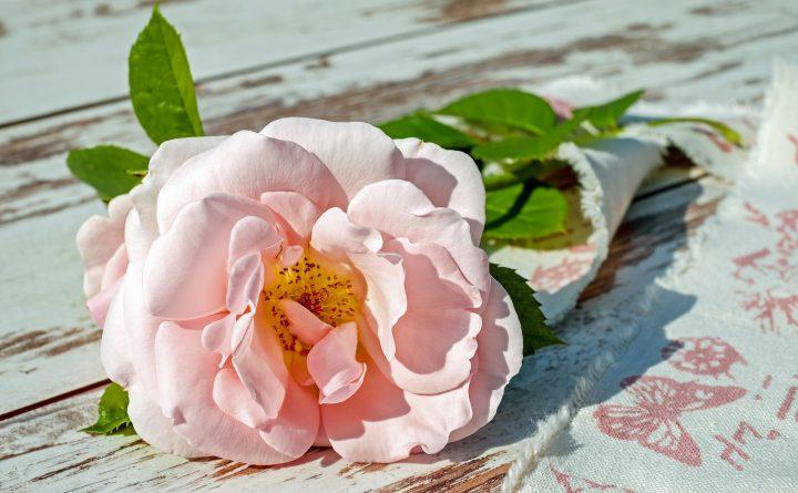 rose-2378156_1920