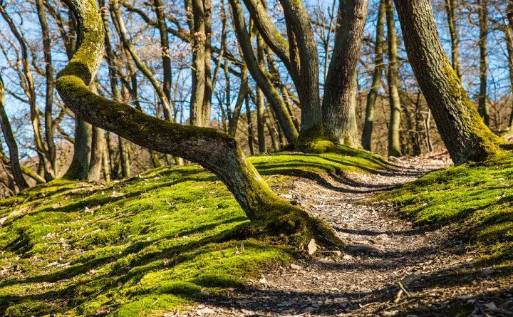 sentier-forestier