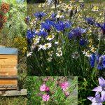 ruche-miel-bio-Auvergne