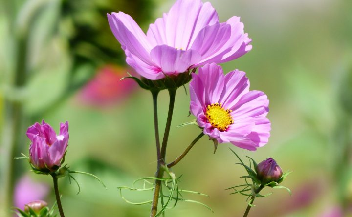 fleurs9-3