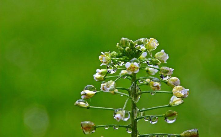 plante-sauvage_cuisine_herbes_crudites