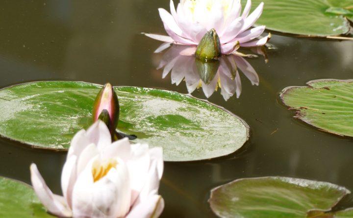 fleurs12-3